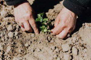 Read more about the article Tunnetko yritysten kehittämispalvelut?
